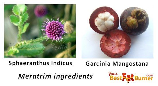 meratrim ingredients - dr oz